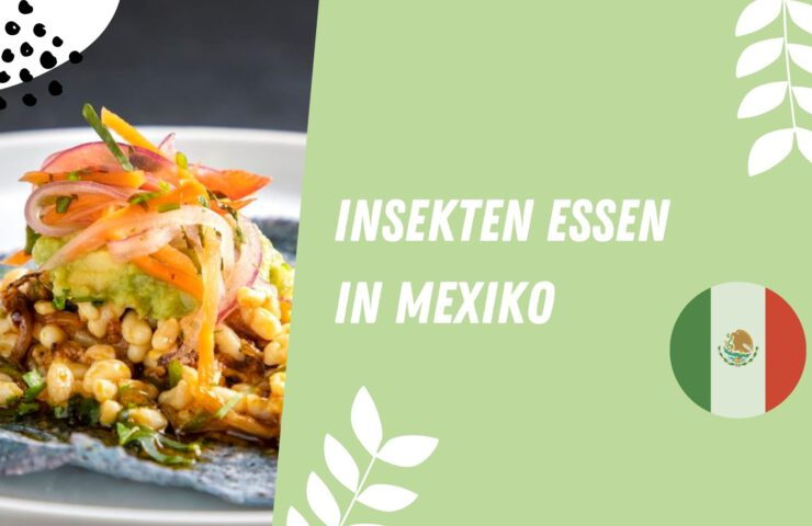 Insekten essen in Mexiko